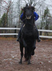 NÄ! Jag VILL INTE gå ditåt! *helt anonym häst och ryttare*